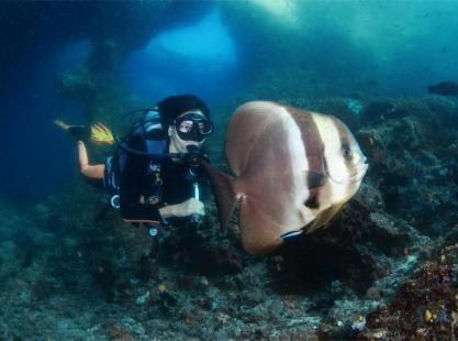 Diver and batfish Indonesia