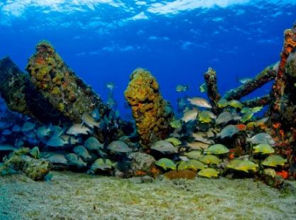 Fish on Sugar Wreck Grand Bahama