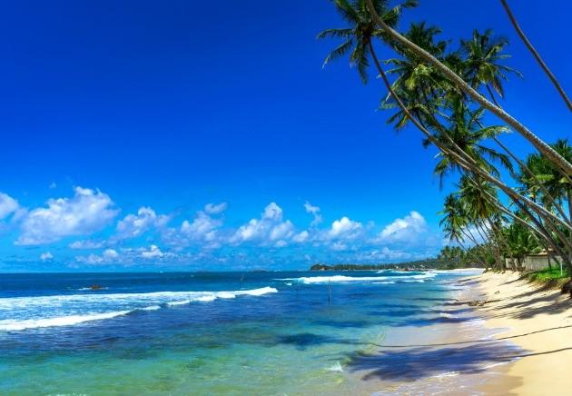Sri Lanka palmtree lined shoreline